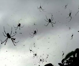 spider, black and white, and black image