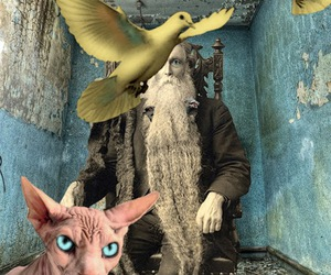 birds, cat, and Collage image