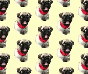 dog, funny, and patterns image