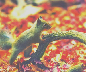 autumn, fall, and squirrel image