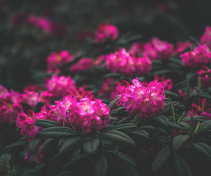 beautiful, flower, and lovely image