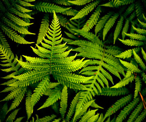 green, nature, and fern image