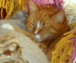 blankets, cat, and cozy image