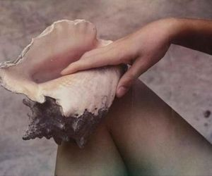 beach, shell, and conch image