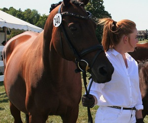 animals, dressage, and equestrian image