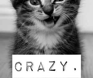 black and white, cat, and crazy image