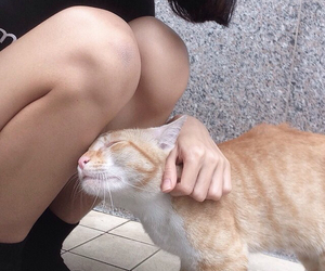 adorable, asian, and pets image