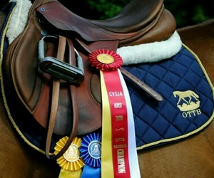 equestrian, equine, and style image