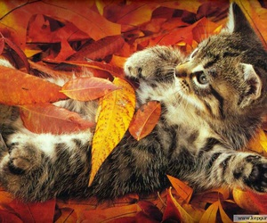 cat, autumn, and leaves image