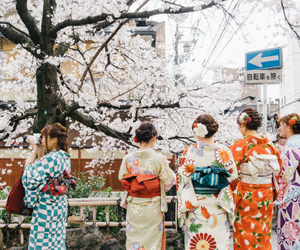 flowers, japan, and kyoto image