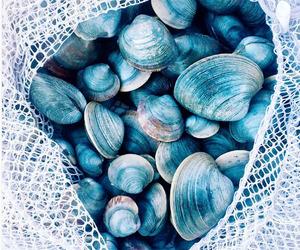 blue, mermaid, and shells image