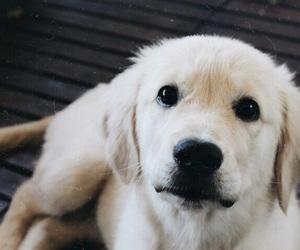 amazing, cutie, and dog image