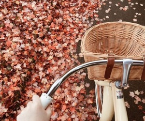 autumn, bike, and cold image