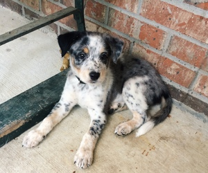 calico, cute animals, and cute puppy image