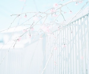 pastel, blue, and flowers image