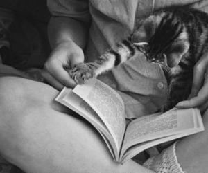 amore, book, and curiosity image