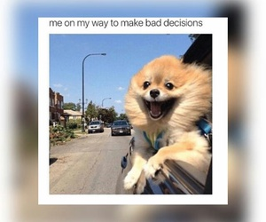 dog, bad decisions, and funny image