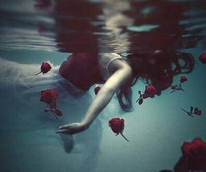 rose, water, and flowers image