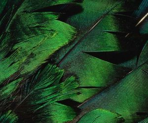 green, feather, and aesthetic image