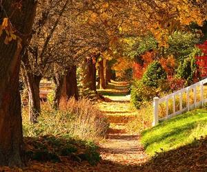 autumn, beautiful, and fall image