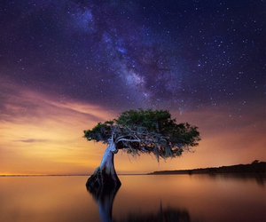 nature, stars, and sunset image