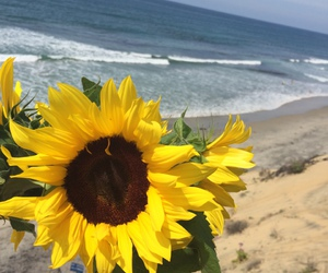 flowers, beach, and sunflower image