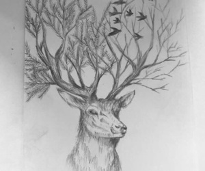 deer, drawing, and pencil image