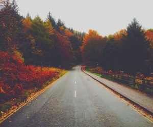 fall, leaves, and tumblr image