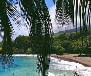 beach, palms, and ocean image