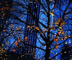 fall, light, and autumn image
