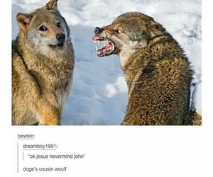 derp, meme, and doge image