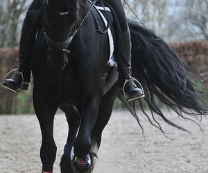 horse, equestrian, and black horse image