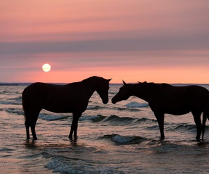 horse, animals, and sunset image