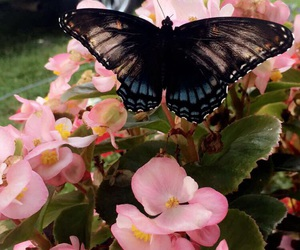 beautiful, butterfly, and color image