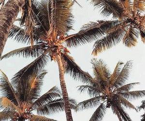 inspo, palms, and summer image