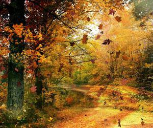 autumn, fall, and jesień image