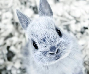 bunny, winter, and cute image