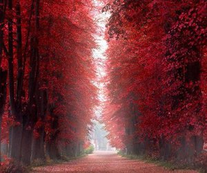 red, nature, and forest image