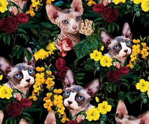 background, cat, and flowers image