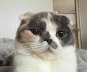 cat, gato, and pet image