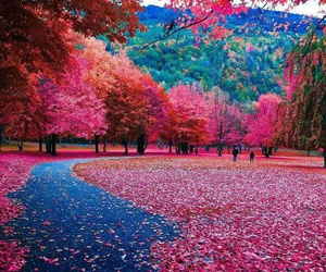 beautiful, fall, and nature image