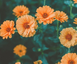 flowers, orange, and nature image