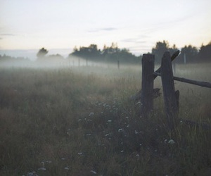 fog, fence, and nature image