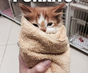 burrito, funny cat, and purr image