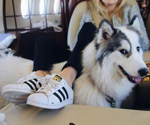 dog, adidas, and animal image