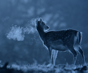 deer, blue, and cold image