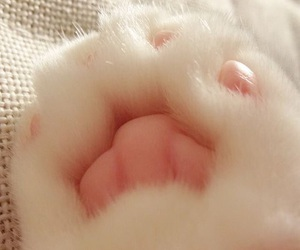 cat, paw, and kitty image