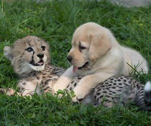 cheetah, dog, and puppy image