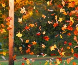 beautiful, fall, and season image
