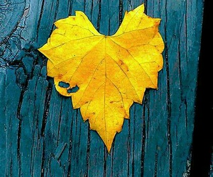 autumn, heart, and yellow image